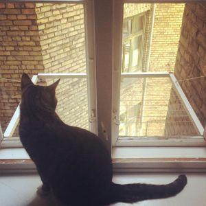 Katte ville vælge Goma Hangouts østerbro vindue vinduesmonteret, 2-fags vindue,